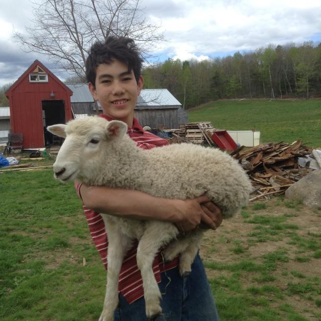 Israel and the lamb