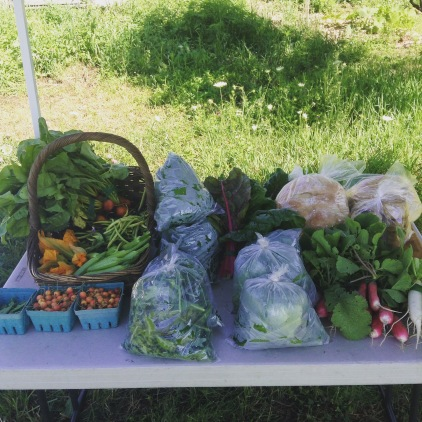 CSA Pick-up Day